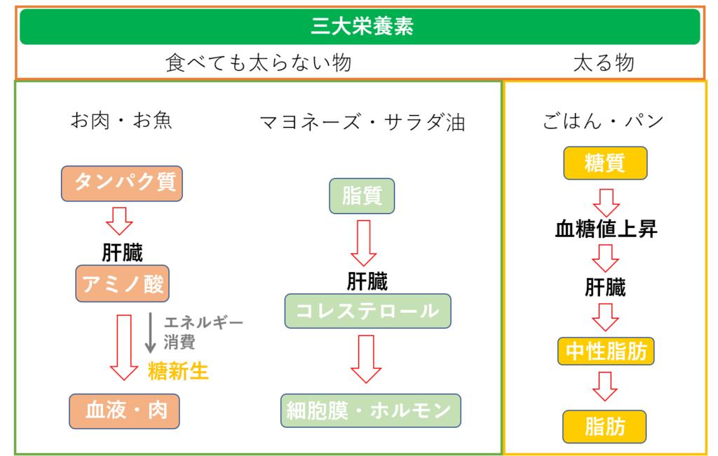 脂質 代謝 脂質代謝とは - sangyo.hokenshi.net